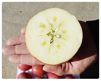 061207_dumun_apple_img02.jpg